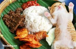 nasi-kucing
